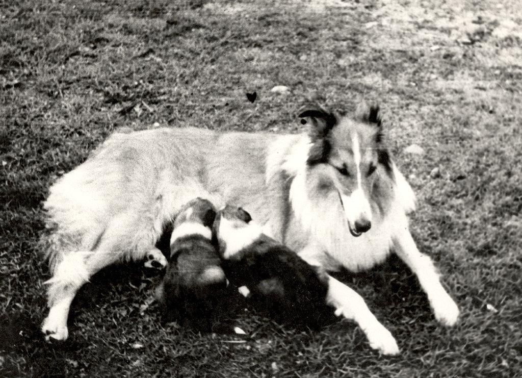 Эрна со щенками