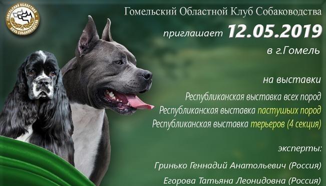 Гомель выставка собак 12.05.2019