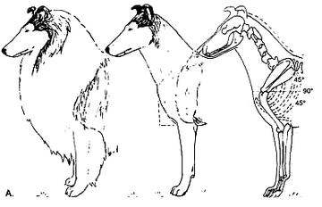 Собака (А)