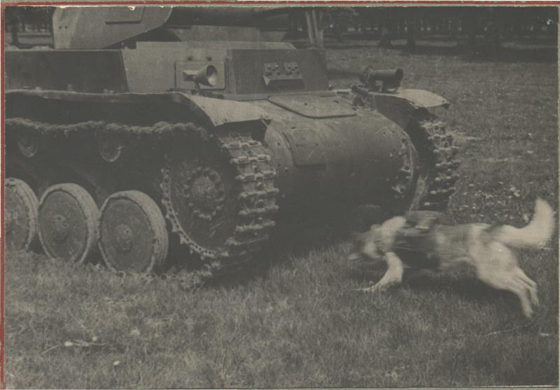 Собаки – истребители танков
