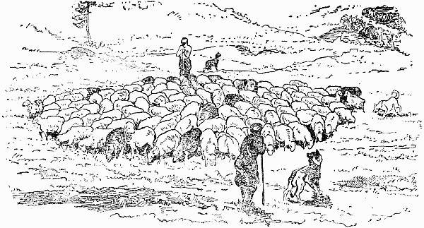 пастьба овец
