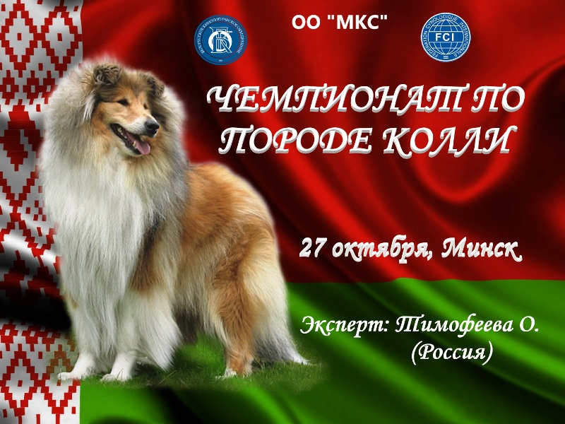Чемпионат колли -2019, Минск, эксперт Тимофеева О.