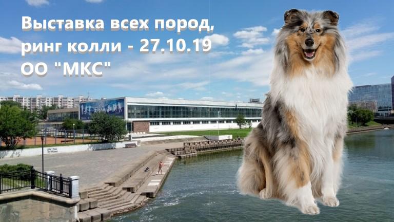 Ринг колли, республиканская выставка собак 27.10.2019, Минск