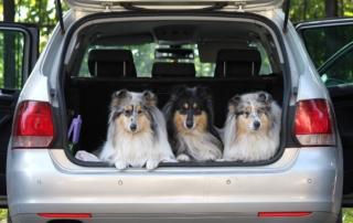 Путешествие с собакой на машине
