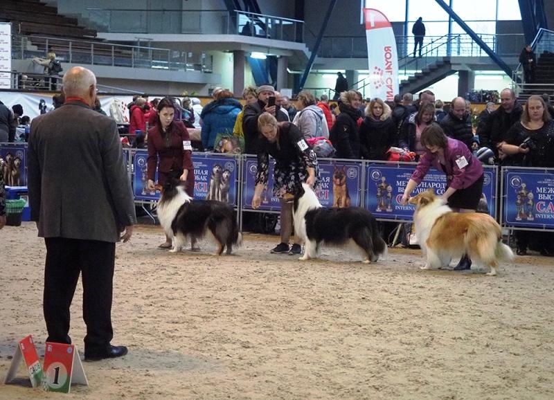 Международные выставки собак – CACIB