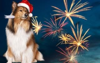 Как помочь собаке пережить новогодний стресс? (собаки и фейерверки)