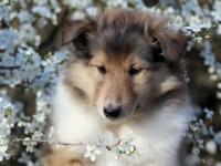 Персиковый Цвет Климсвевик