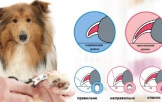 Как правильно постричь собаке когти?