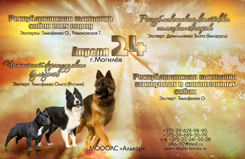 Республиканская выставка пастушьих и скотогонных собак